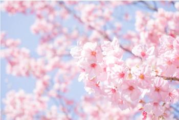 写真:花見